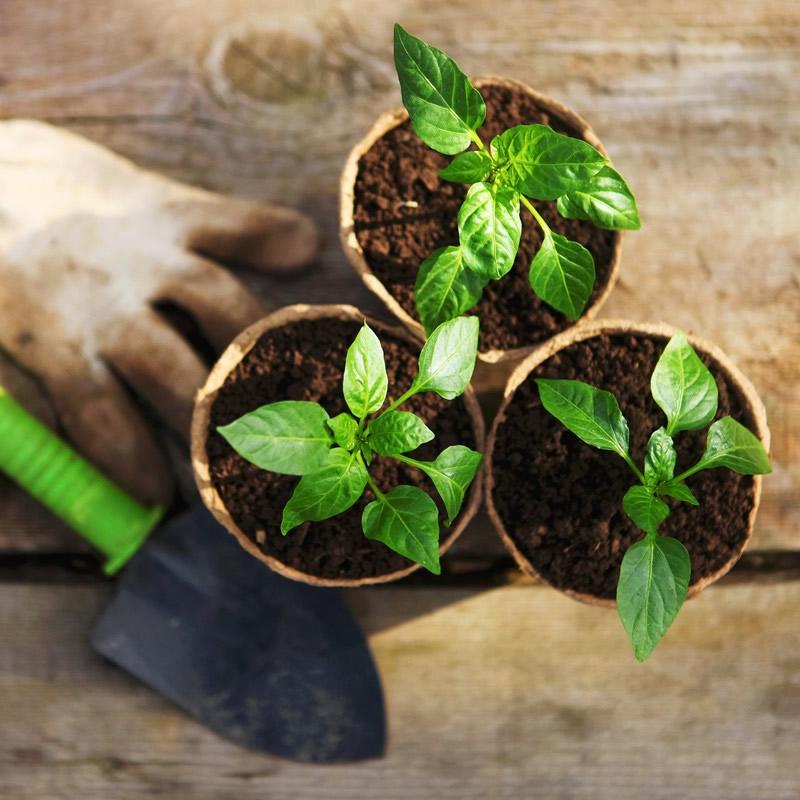 Qué sembrar en un huerto?