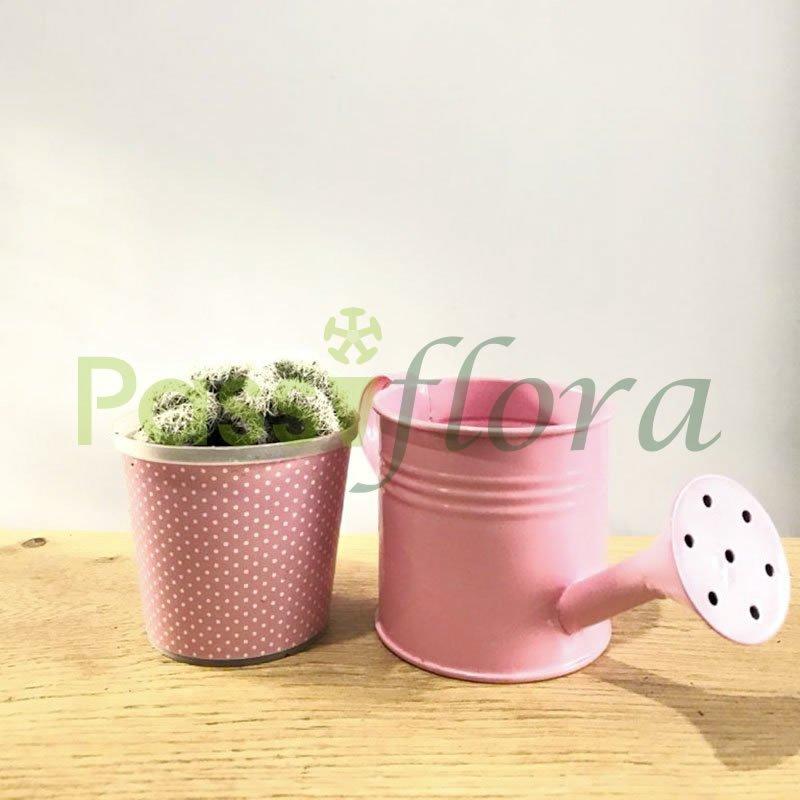 Kit cactus portamacetas color rosa