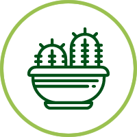 Arreglos terrarios cactus